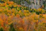 NY - Adirondacks Rock Face Fall Colors 1.jpg