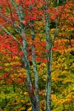 NY - Adirondacks Treescape 1.jpg