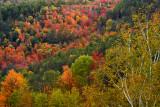 NY - Adirondacks Treescape 2.jpg