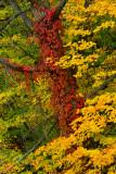 NY - Adirondacks Treescape 4.jpg