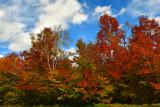 NY - Adirondacks Whiteface Mountain Treescape 2.jpg