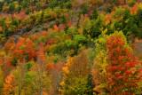 NY - Adirondacks Whiteface Mountain Treescape 3.jpg