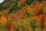 NY - Adirondacks Whiteface Mountain Treescape 4.jpg