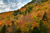 NY - Adirondacks Whiteface Mountain Treescape 5.jpg