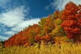 NY - Alabama Swamps Treescape 1.jpg