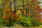 NY - Alabama Swamps Treescape 2.jpg