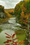 NY - Letchworth SP Fall Canyon 2.jpg