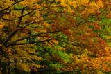 NY - Letchworth SP Treescape 1.jpg