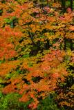 NY - Letchworth SP Treescape 2.jpg