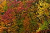 NY - Letchworth SP Treescape 3.jpg