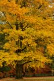 NY - Letchworth SP Treescape 4.jpg