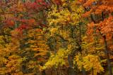 NY - Letchworth SP Treescape 5.jpg