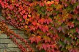 NY - Letchworth SP Treescape 6.jpg