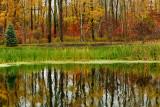 NY - Lockport Fall Swamp.jpg