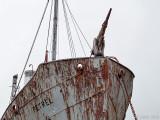Whale-catcher Petrel - Walvisjager Petrel