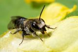 Netherlands, Noordwijk, Bees 2017-2020