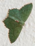 Netherlands, Noordwijk: Butterflies & Moths 2017-2020