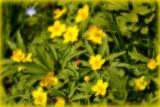 wild_flowers_plant