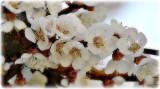 flowers_plants