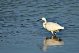 water_and_birds_ptice_in_voda