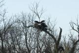 West River Road Eagles