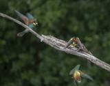 et les deux complices filent à tire d'aile