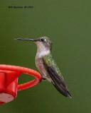 5F1A1090_RT_Hummingbird_.jpg