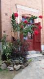 Poinsettia tree outside upper Antananarivo residence
