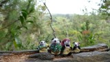 The Pandafords