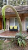 Plant at the Hotel Au bois vert