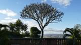Tree Musee de la Photographie de Madagascar courtyard