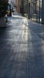 Light Reflections on California Street