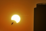 Partial solar eclipse 26Dec2019 JED.jpg