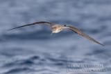 Bird trip to Cape Verde: Santiago Island (February 2012) and Sao Nicolau Island (June 2018)