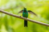 Bird trip to Cuba (April 2019)