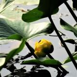 aquatic_growth