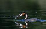 Water birds 2020