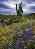 Desert Wildflowers and Cacti