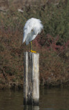 Birds -- Shoreline Lake, October 2020