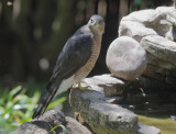 Birds -- SF Bay Area, LATEST
