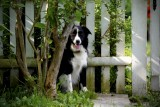 A Dog Named Elizabeth