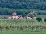 One of Many Vineyards near Verona