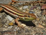 Up Close and Personal with a Lizard in Olympia, Greece