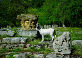 A Feral Dog in Olympia, Greece