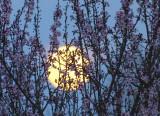 super moon 364
