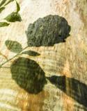green shadow 480