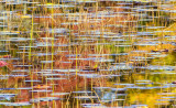 pond view 149