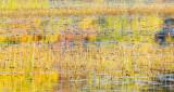 autumn pond 138
