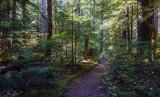 Silver Falls Trail -N
