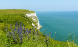 The White Cliffs of Dover -LSS